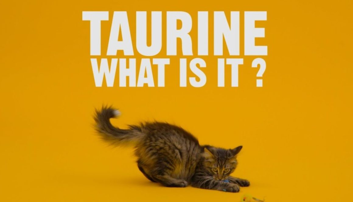 Taurine And Cats, By Kevin Meehan
