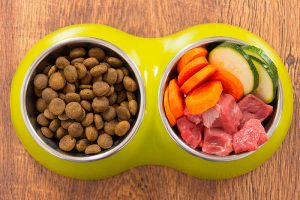 Dog Food for your Dog