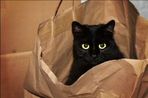 Cat hiding inside the paper bag.